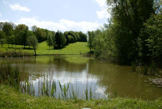 Wald und Schlosshotel Friedrichsruhe - 2